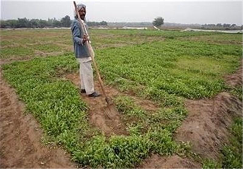افزایش جمعیت، اراضی کشاورزی استان تهران را تهدید می کند