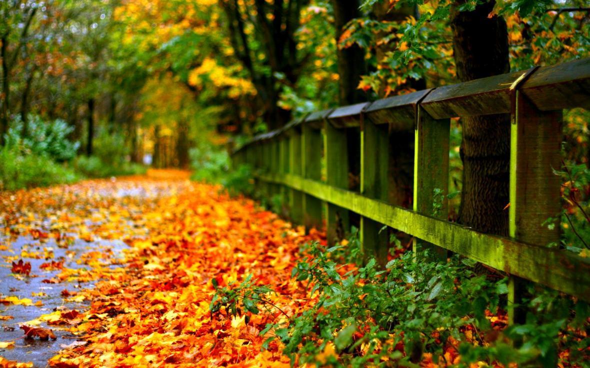 شیمی در لابلای برگ های پاییزی ، علمی که دید شما را نسبت به دنیای اطرافتان تغییر می دهد