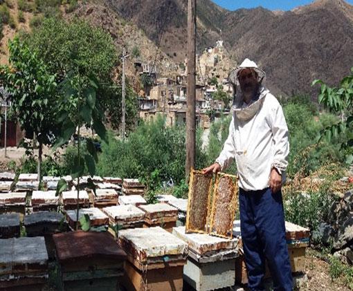 برداشت بیش از 2 هزار تن عسل در شهرستان خداآفرین