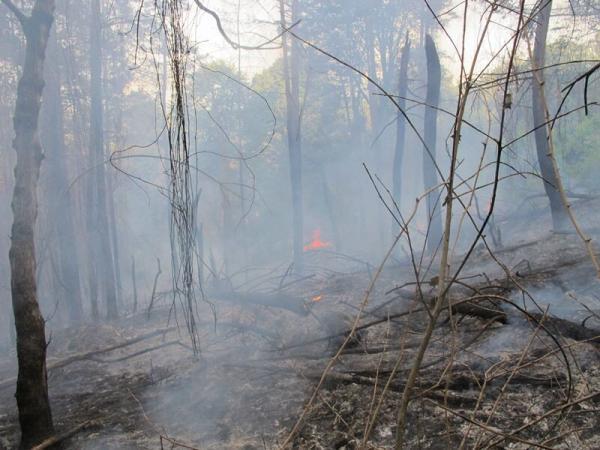 خبرنگاران جنگل های رامسر آتش گرفت