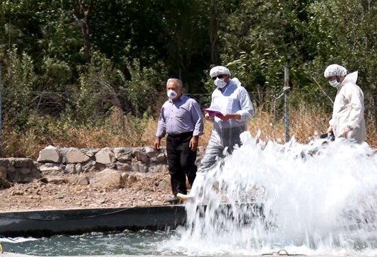 کاهش 80 درصدی بروز بیماری IHN در ماهیان قزل آلای آذربایجان شرقی