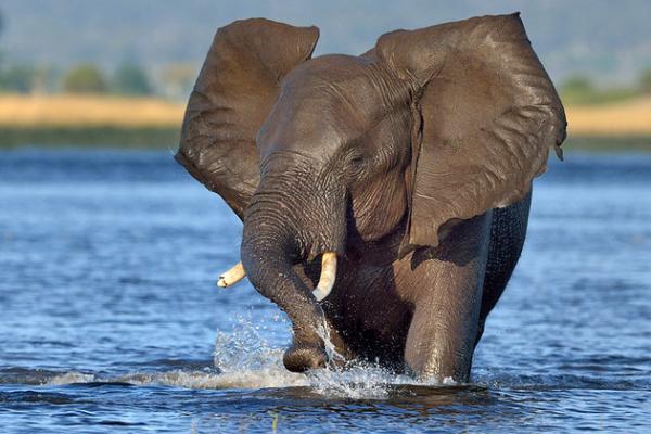 بهترین پارک ملی حیات وحش در آفریقا